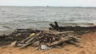 Swimming Advisory: Debris dominates Chesapeake