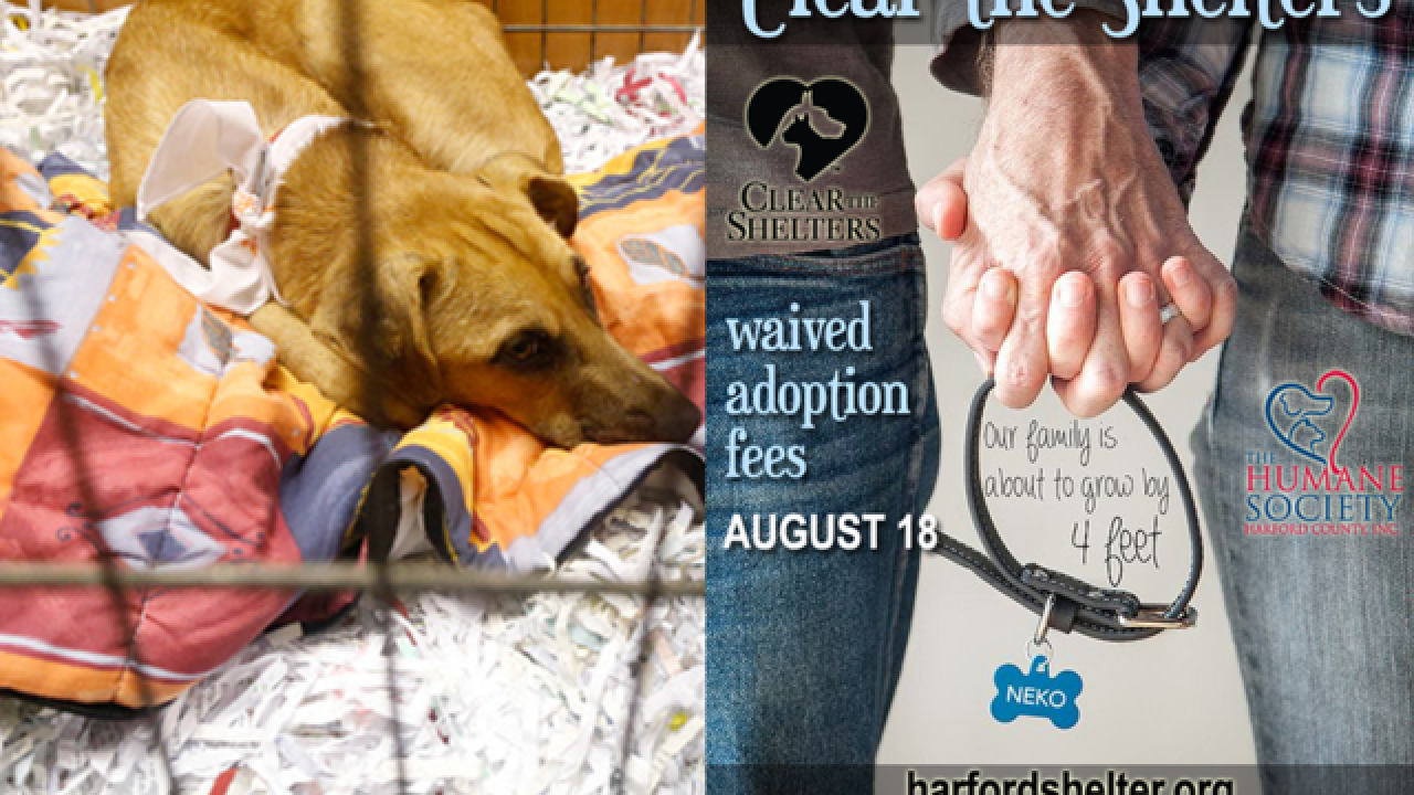 "Harford County animal shelter waives adoption fees Aug. 18 in ""Clear the Shelters"" event"