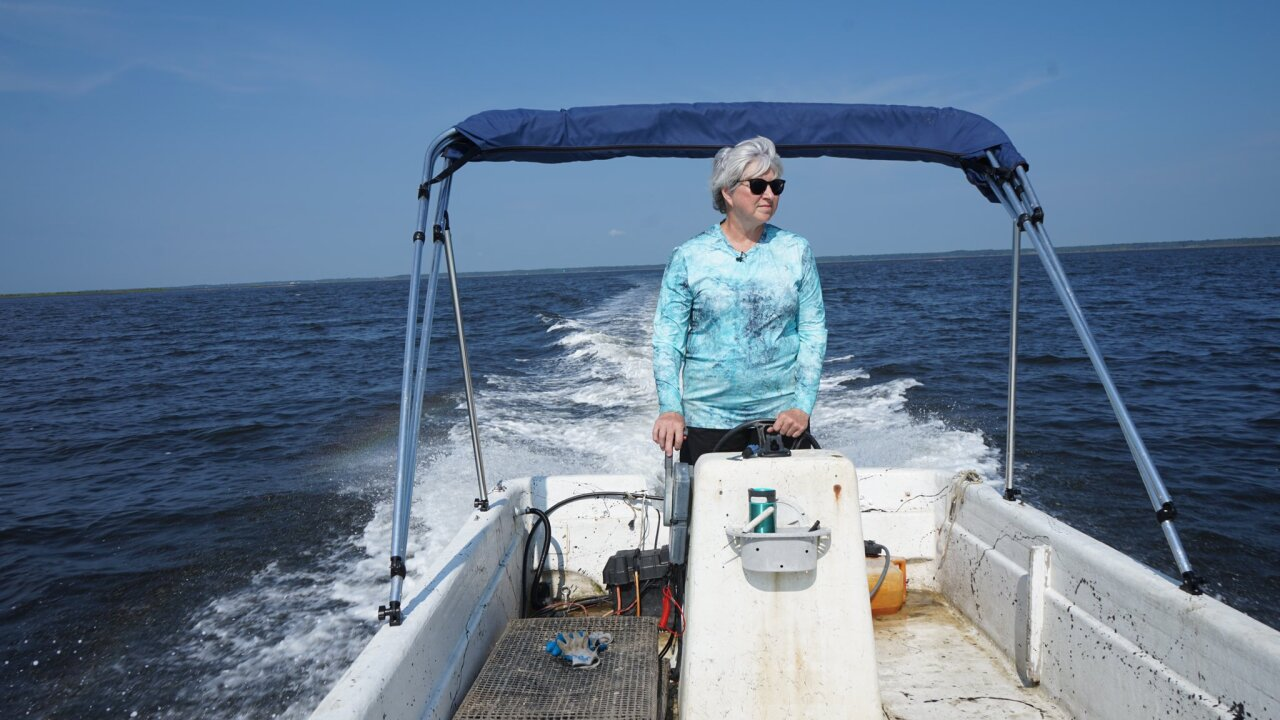 Oystermom, helping create oyster aquaculture in Florida