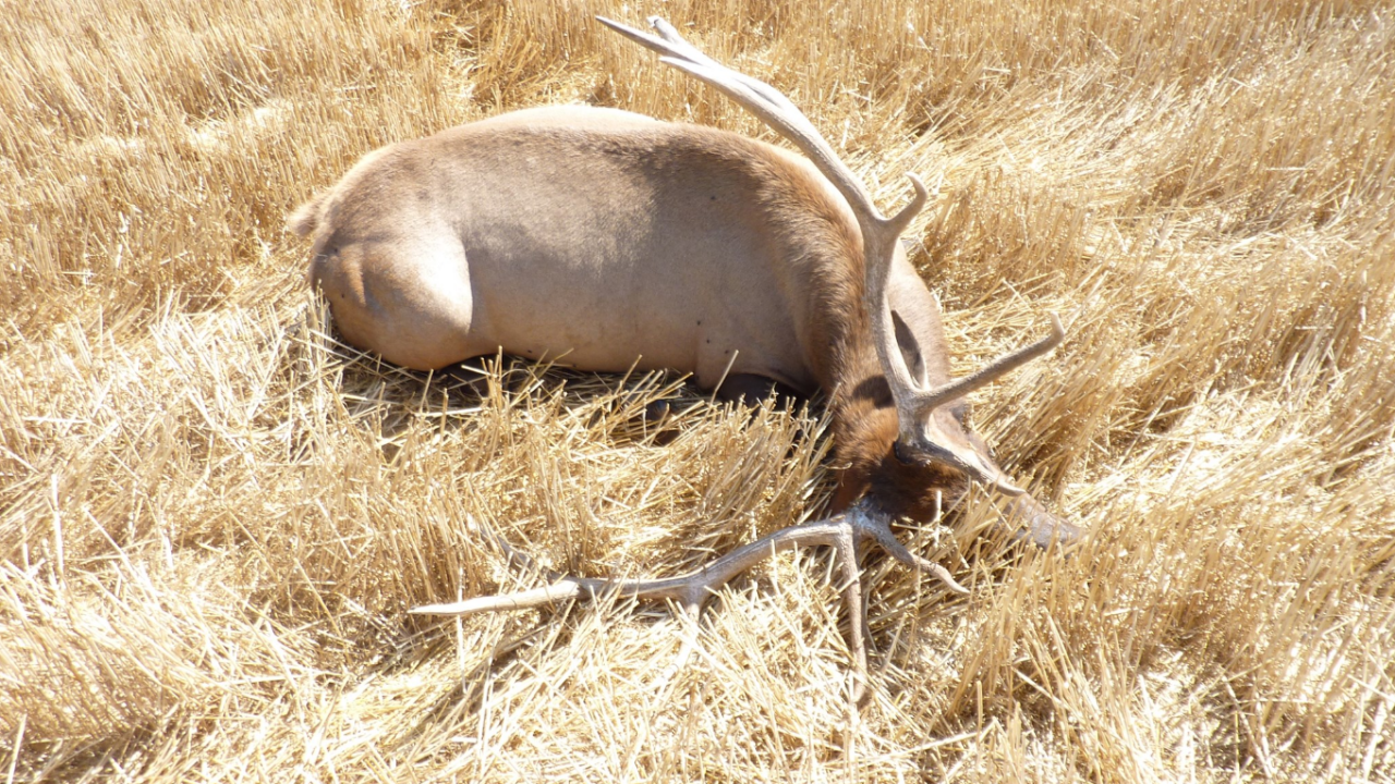 Sportsman's groups add to reward in elk poaching case