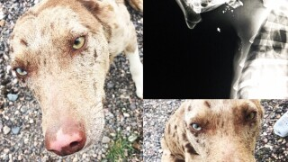 Humane Society offers $5,000 reward in case after dog found shot, abandoned along Utahhighway
