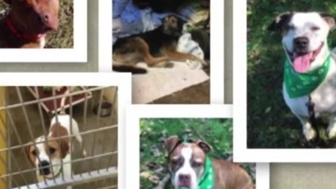 Community angry after shelter dogs euthanized