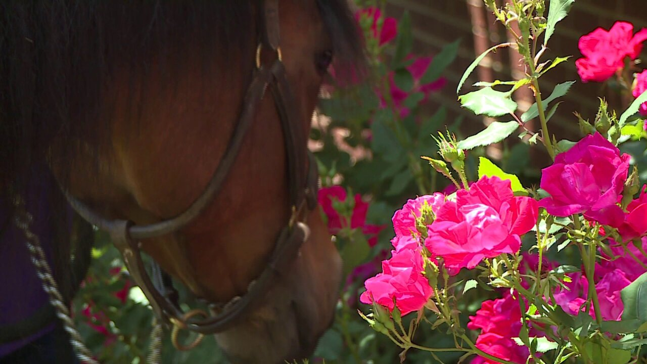 horseflower.jpeg