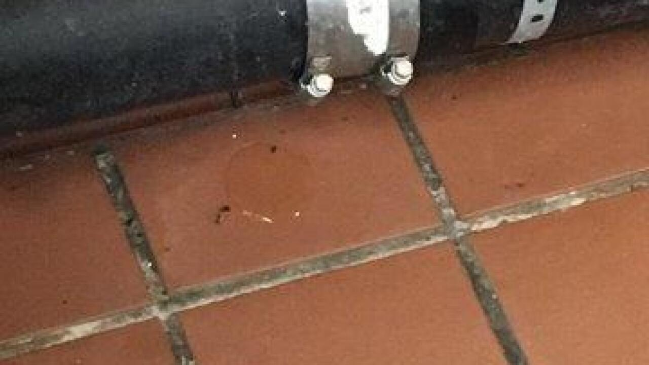 Rats at Albertsons on Dirty Dining