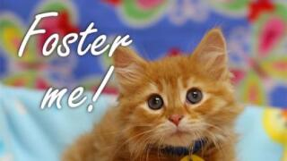 Wis Humane Society foster kitten.jpg