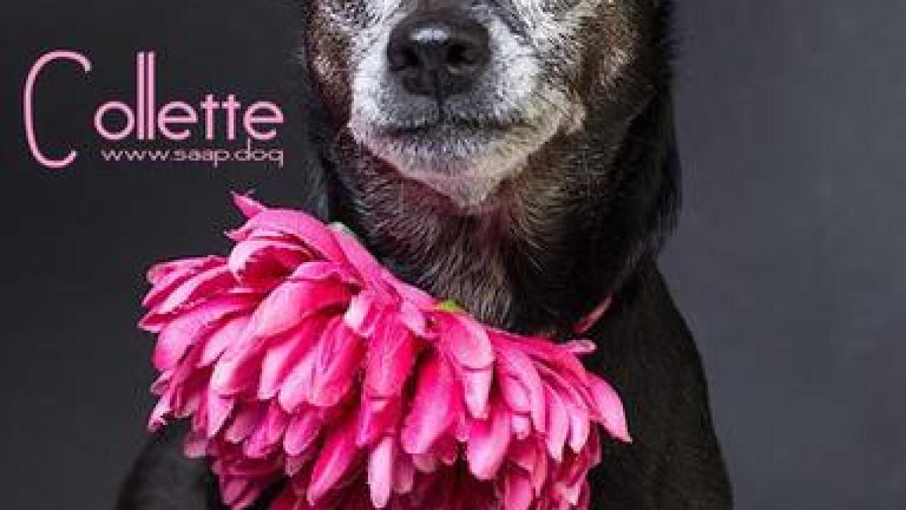 Photographer helps rescue dogs find loving homes