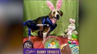 wptv-dog-bunny.jpg