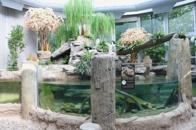 GALLERY: Detroit Zoo to debut new habitat housing giant salamanders