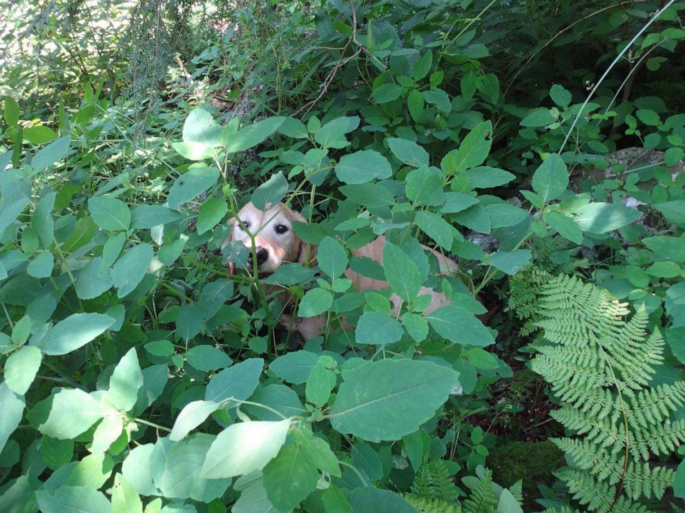 lost-dog-03-as-ht-190725_hpEmbed_4x3_992.jpg