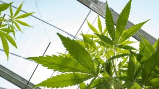NYS lawmakers hold marijuana listening session