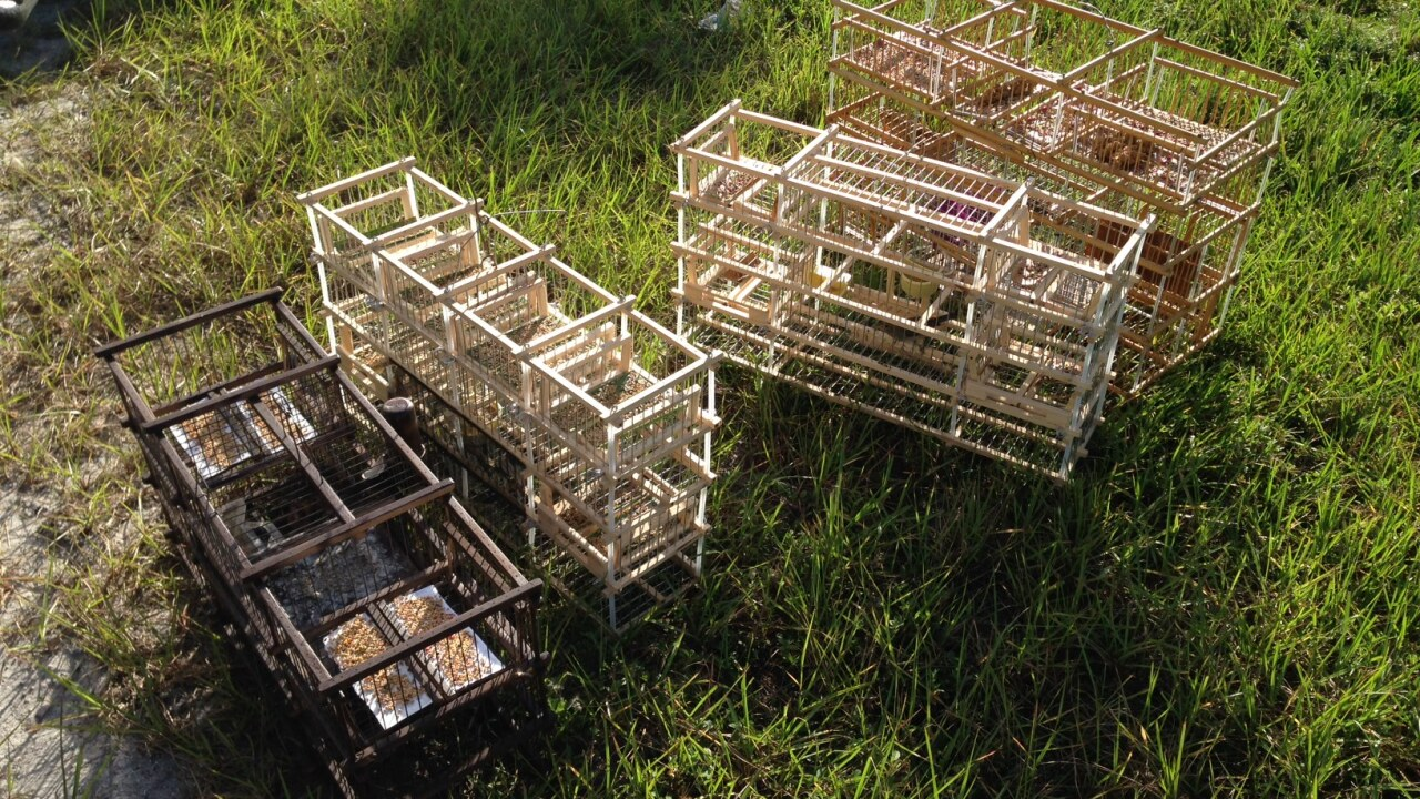 WPTV bird trapping cages.jpg