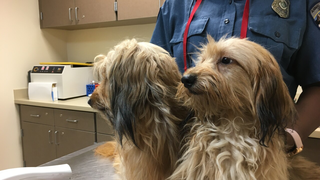 Owner surrenders 45 dogs from Hamptonhome