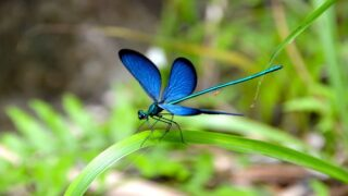 5 Ways To Attract Dragonflies To Your Yard To Help Eliminate Mosquitoes