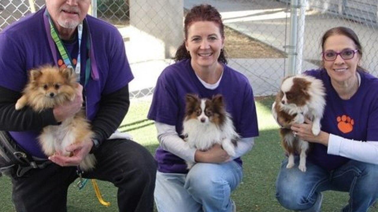 Golden Knights host rescue dog adoption event