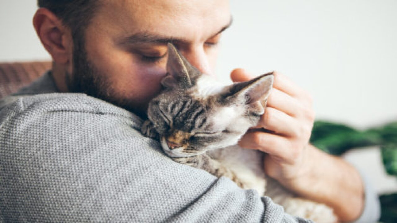 Study Shows Cats Are More Attached To Their Humans Than We Give Them Credit For