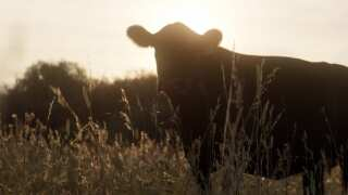 Change Through Conversation   Yellowstone Grassfed Beef   Under the Big Sky