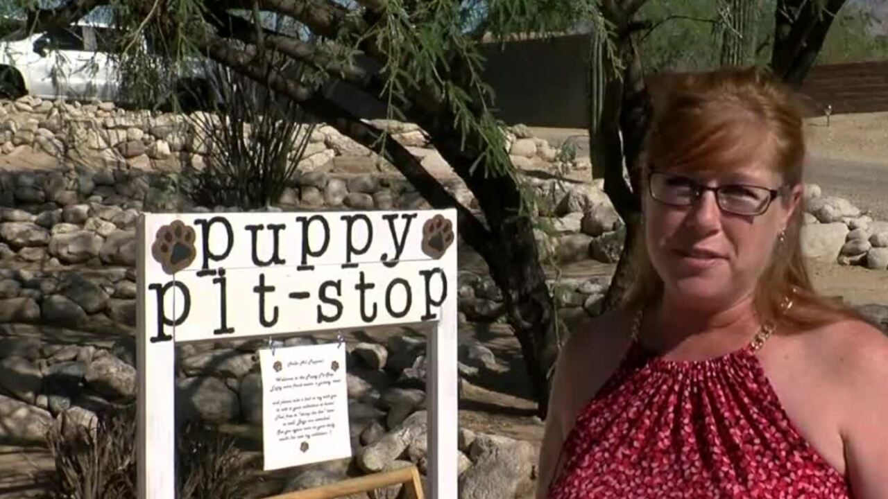 """A woman has set up a """"puppy pit stop"""" near Speedway and Houghton."""