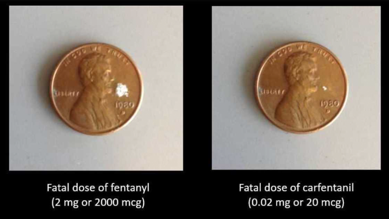 Carfentanil.png