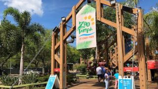 zoo-tampa.png