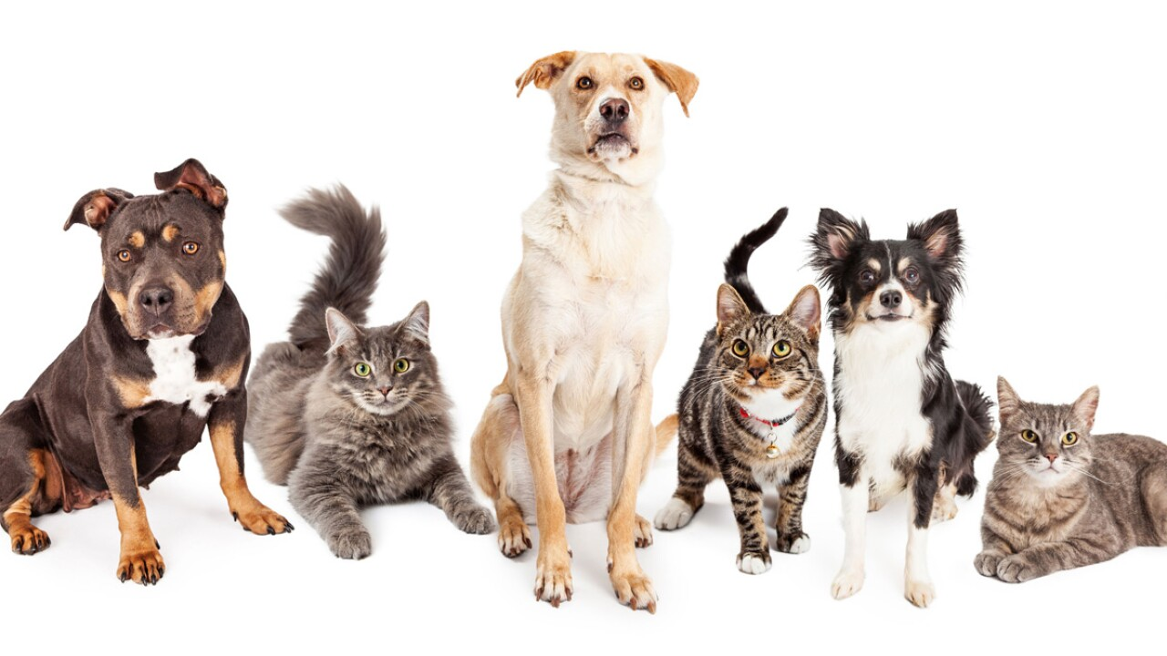Humane Society of Utah Summer AdoptionEvent