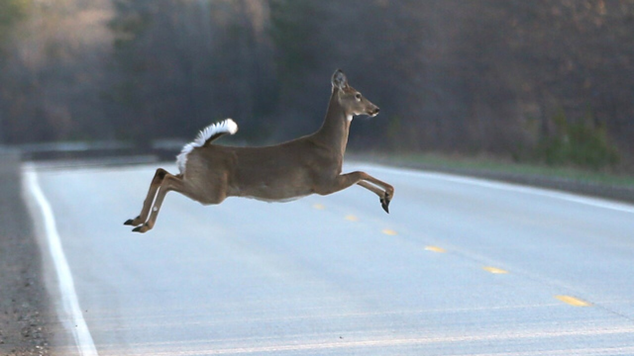 Be wary of large number of deer on area roads, Tulsa County Sheriff's Office says