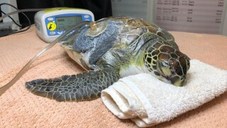 wptv-turtle-rehab1.jpg