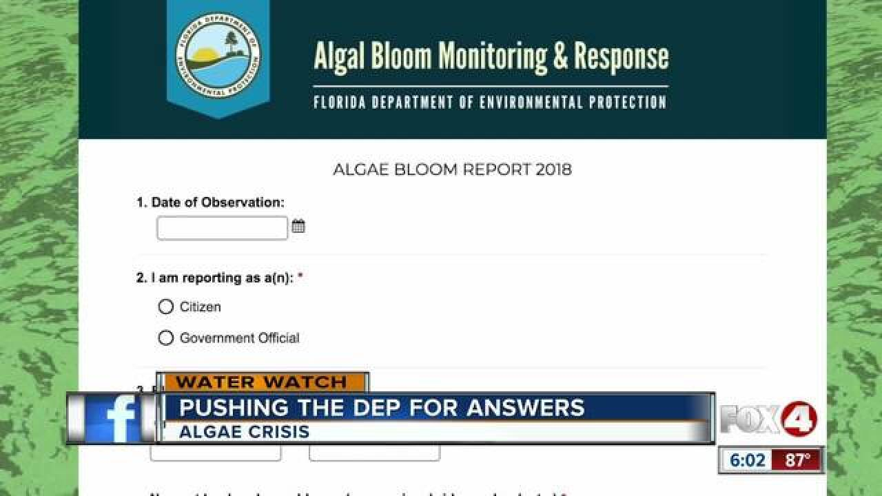 What happens when you report a bloom to the DEP