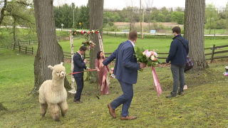 A trendy concept that's gained international appeal is coming to Northeast Ohio — pop-up weddings.