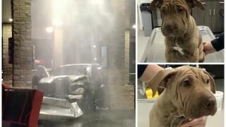 MESA QT puppies fire.jpg