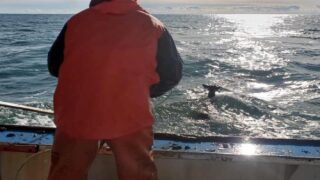 This Lobster Boat Saved A Helpless Deer That Drifted 5 Miles Offshore