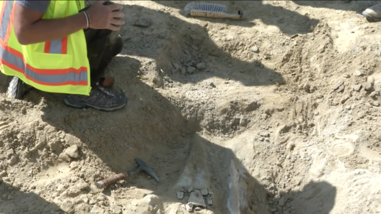 PHOTOS: Rare triceratops skull found in Colorado