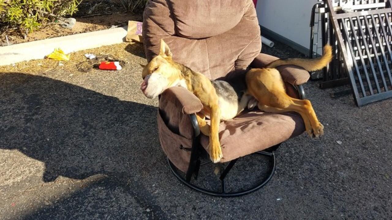 Viewer finds tortured, dead dog on eastside