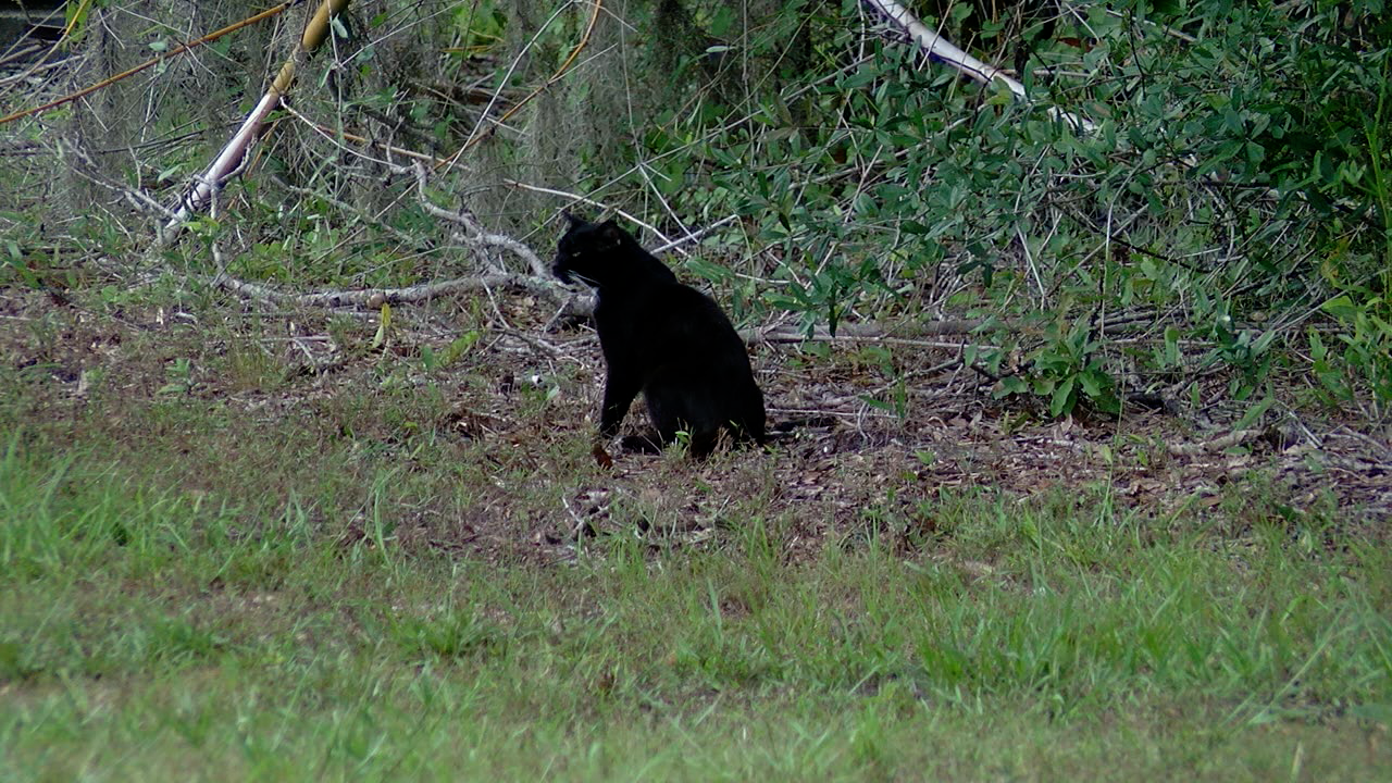 working cats Manatee County 2