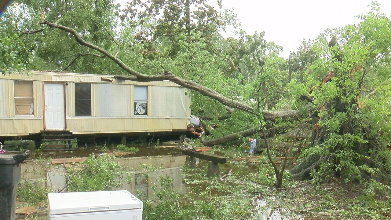 A bee-infested tree fell through this Louisiana family's home as Tropical Storm Barry hit