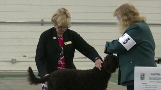 Great Falls dog show highlights the bond between dogs and handlers