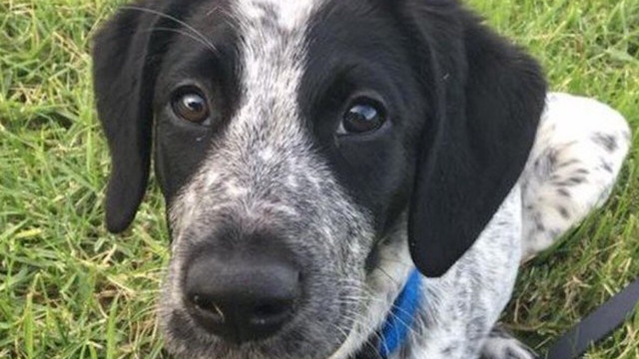 Trainee bomb detector puppy shot dead at New Zealand airport