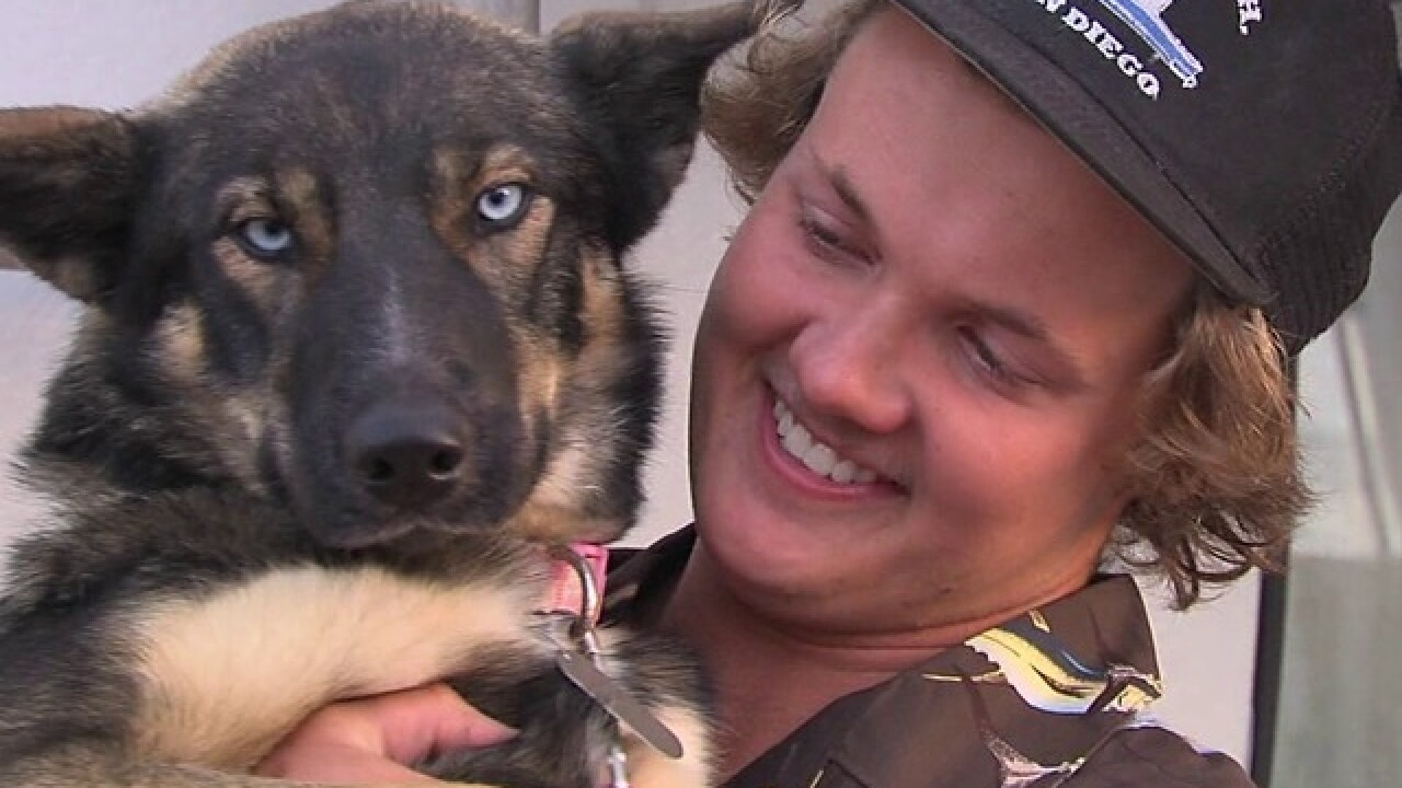 Owner reunited with miracle dog lost at sea