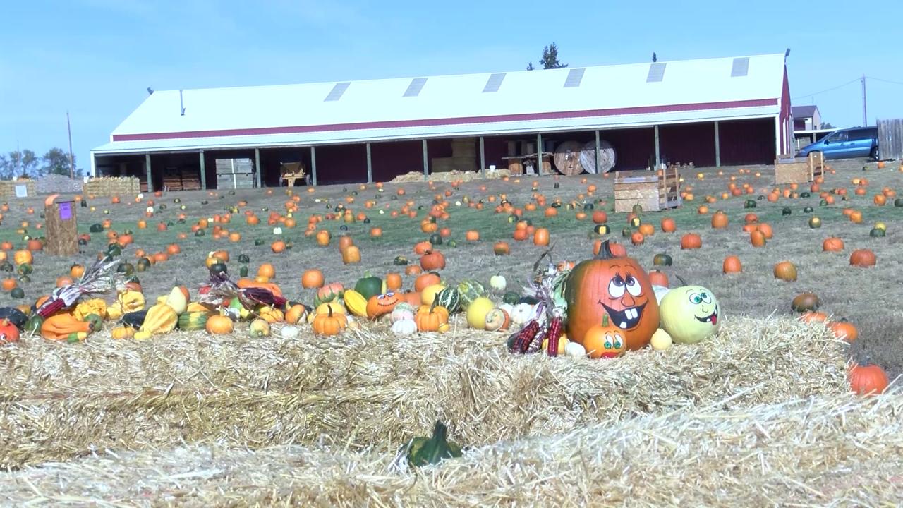 """Pumpkins For A Cause"""