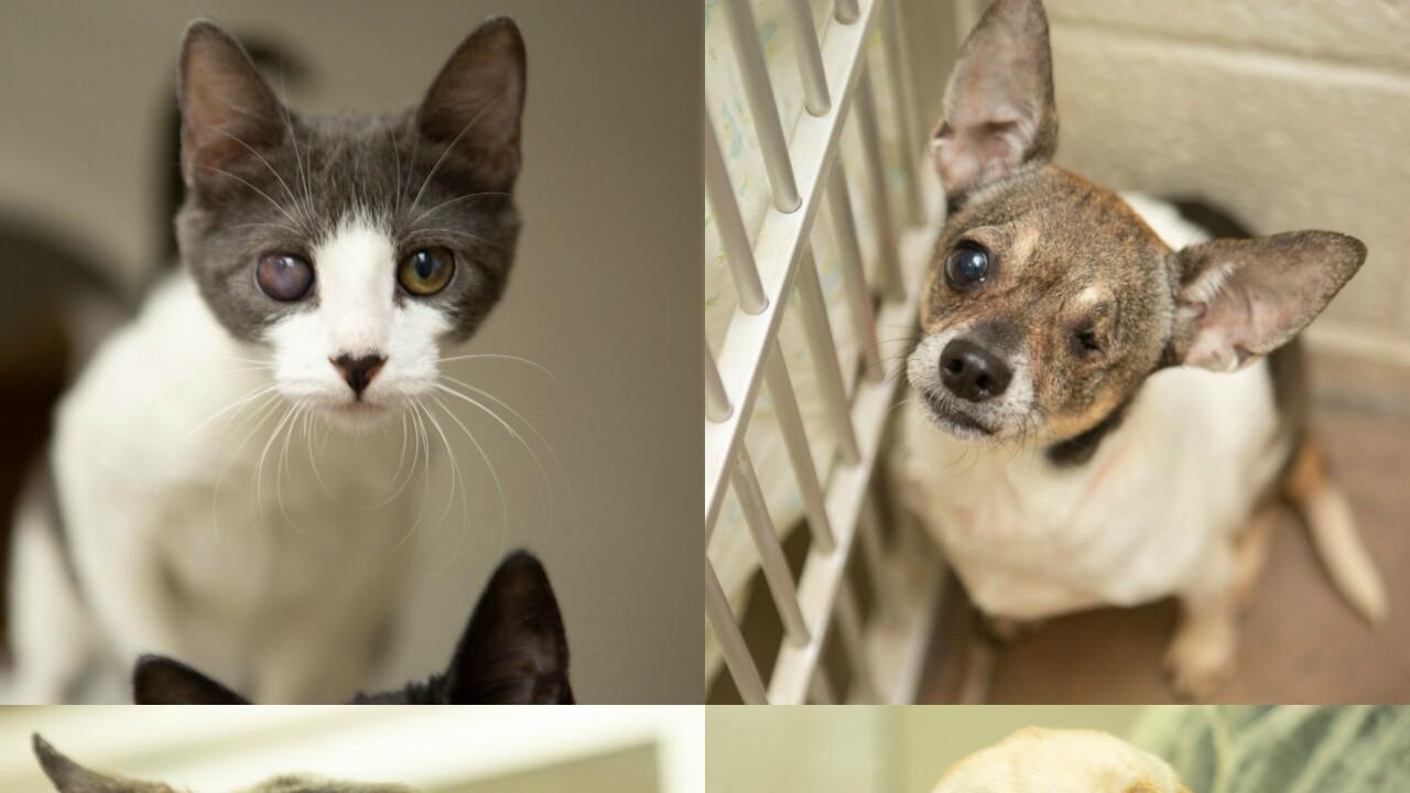 KNXV Mesa Animals Rescued Recovering.jpg