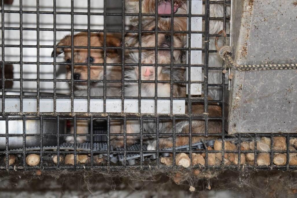 Animal Cruelty 7.jpg