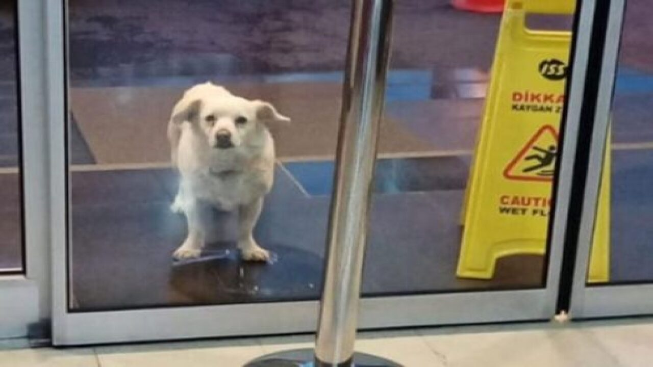 Dog Spent 6 Days Outside A Hospital Waiting For His Sick Owner