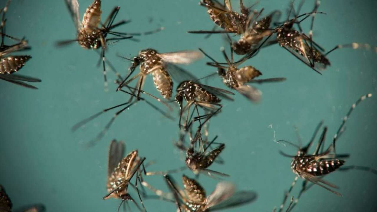 LFCHD To Spray For Mosquitoes Next Week