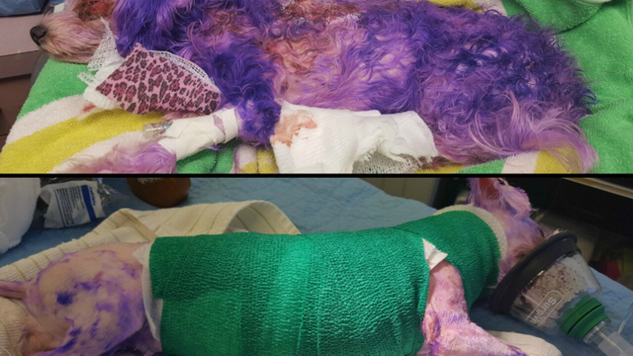 Human hair dye severely burns dog in Florida
