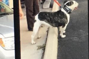 Cheyenne_police_Blatchford_dog_arizona_arrest