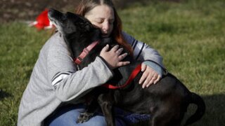 3 years later, dog and Michigan owners reunited in Illinois