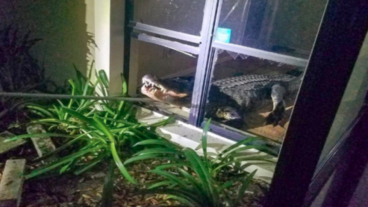 A Large Alligator Broke Into A Florida Woman's Home And Tore Through Her Kitchen