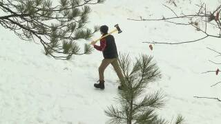 Permits available for cutting your own Christmas tree in Montana