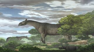 Newly Discovered Rhino Species Was One Of The Largest Mammals On Earth