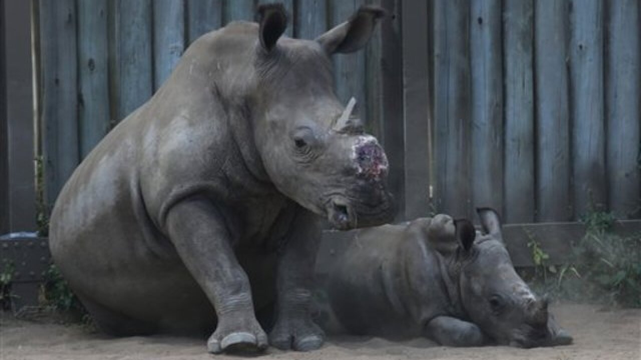 Drones used to battle rhino poaching