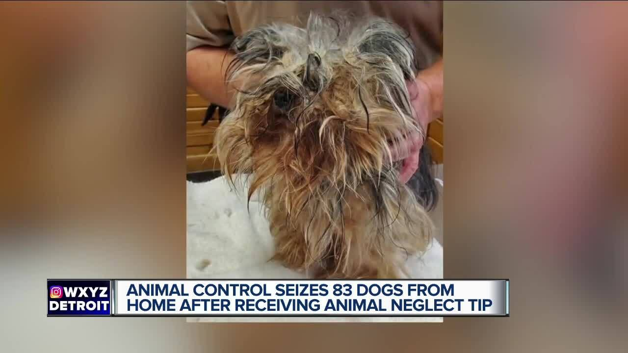83 dogs seized in St. Clair Township.jpg